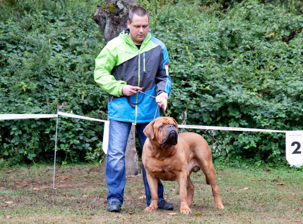 Club für Molosser Bordeauxdogge -2986