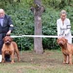 Jahressieger 2015 Bordeauxdogge
