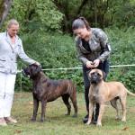 Jahressieger 2015 Bullmastiff