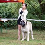 Jahressieger 2015 Mastiff